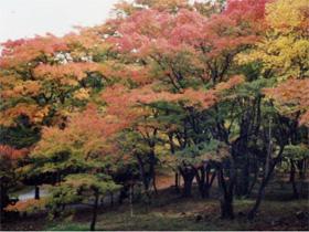 伊香保森林公園(2)