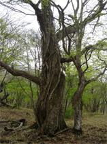 赤城森林公園(2)