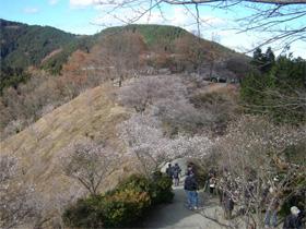 桜山森林公園(1)